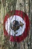 L'obiettivo, dipinto su un tronco di albero con i vecchi segni del passato colpisce Fotografia Stock Libera da Diritti