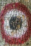 L'obiettivo, dipinto sul tronco di una quercia con i vecchi segni del passato colpisce Fotografia Stock