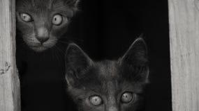 L'obscurité des chats images stock