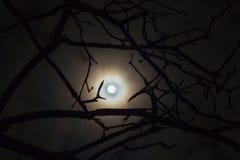 L'obscurité a enchanté la photo d'une pleine lune dans les branches d'arbres Pleine lune brillante dans le paysage mystérieux de  photographie stock