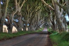 L'obscurité protège des arbres Photographie stock libre de droits