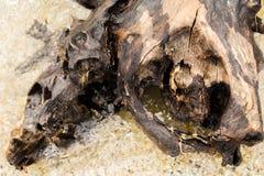 L'océan comme arbre de bois de construction sur la plage Photo stock