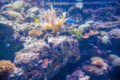 L'océan de parc d'océan se demande l'aquarium d'espèce marine de observation de personnes Photos libres de droits