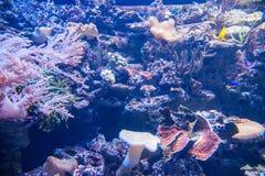 L'océan de parc d'océan se demande l'aquarium d'espèce marine de observation de personnes Images stock