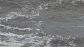 L'océan pacifique banque de vidéos