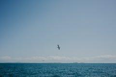 L'ocast du Nouvelle-Zélande Photo stock
