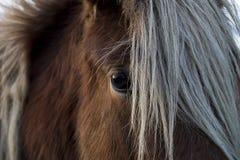 L'occhio del cavallo Fotografie Stock Libere da Diritti