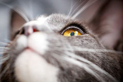 L'occhio del gatto immagini stock libere da diritti