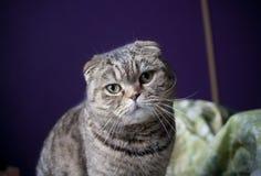 L'occhio del gatto Fotografia Stock Libera da Diritti
