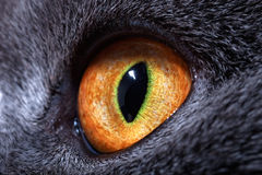L'occhio del gatto giallo Immagini Stock Libere da Diritti