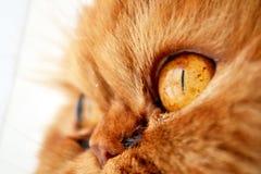 L'occhio del gatto rosso Fotografia Stock