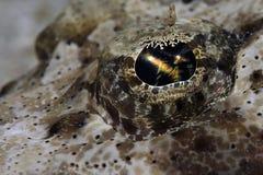 L'occhio del pesce del coccodrillo Fotografia Stock Libera da Diritti