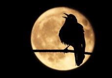L'occhio del ` s di Raven Immagine Stock