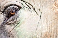 L'occhio dell'elefante fotografia stock