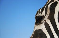 L'occhio della zebra Fotografie Stock