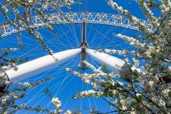 L'occhio di Londra, ruota di ferris, sta alto contro la molla blu profonda s Immagini Stock Libere da Diritti