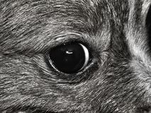 L'occhio di un cane fotografia stock libera da diritti