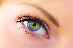 L'occhio femminile a macroistruzione Fotografia Stock Libera da Diritti