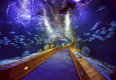 在L'Oceanografic水族馆的玻璃隧道 库存图片