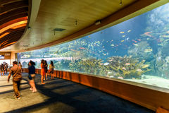 L`Oceanografic The Oceanographic In Valencia. VALENCIA, SPAIN - JULY 29, 2016: L`Oceanografic The Oceanographic is an oceanarium situated in the east of the city Royalty Free Stock Image