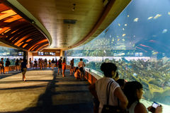 L`Oceanografic The Oceanographic In Valencia. VALENCIA, SPAIN - JULY 29, 2016: L`Oceanografic The Oceanographic is an oceanarium situated in the east of the city Stock Photo