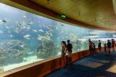 L`Oceanografic The Oceanographic In Valencia. VALENCIA, SPAIN - JULY 29, 2016: L`Oceanografic The Oceanographic is an oceanarium situated in the east of the city Stock Photos