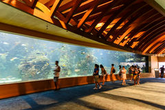 L`Oceanografic The Oceanographic In Valencia. VALENCIA, SPAIN - JULY 29, 2016: L`Oceanografic The Oceanographic is an oceanarium situated in the east of the city Stock Images