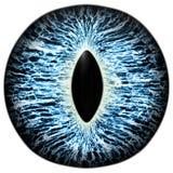 L'oeil bleu animal effrayant avec le pourpre a coloré l'iris, vue de détail dans l'ampoule d'oeil Photographie stock libre de droits