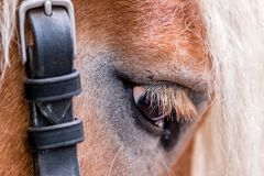 L'oeil d'un cheval Photo stock