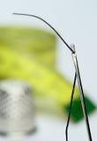 L'oeil d'un pointeau images libres de droits