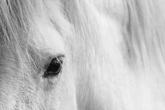 L'oeil de chevaux blancs - verticale noire et blanche d'art photographie stock libre de droits
