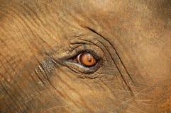 L'oeil de l'éléphant images stock