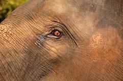 L'oeil de l'éléphant de chéri Photo libre de droits