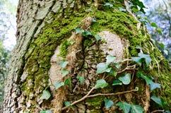 L'oeil de la nature Image stock