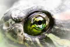 L'oeil de la tortue Images stock