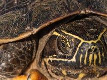 L'oeil de la tortue Shell images libres de droits