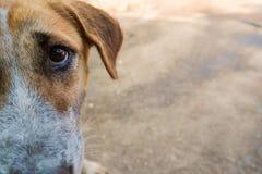 L'oeil de plan rapproché sur le chien a gagné pour les pauvres photos stock