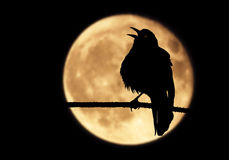 L'oeil du ` s de Raven Image stock