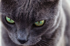 L'oeil du tigre Photo libre de droits