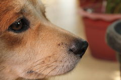 L'oeil et le nez de mon brun photographie stock libre de droits
