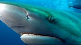 L'oeil profond du requin Images libres de droits