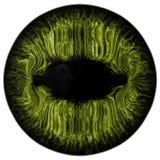 L'oeil vert animal étrange avec le pourpre a coloré l'iris, vue de détail dans l'ampoule d'oeil Photographie stock