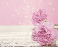 L'oeillet rose fleurit sur la table en bois blanche rustique Images libres de droits