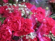 L'oeillet rouge frais et attrayant fleurit avec des souffles de bébé au fleuriste image stock