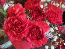 L'oeillet rouge frais et attrayant fleurit avec des souffles de bébé au fleuriste photos libres de droits