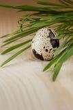 L'oeuf de caille sur un conseil en bois De ressort toujours la vie Images stock