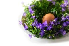 L'oeuf de pâques dans un nid de jacinthe des bois fleurit, le fond faisant le coin sur W Photos libres de droits