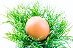 L'oeuf de poule dans l'herbe fraîche avec le fond d'isolement Photo stock