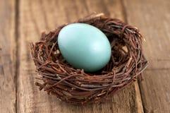 L'oeuf de Robin minuscule dans un petit nid sur le fond en bois de conseil Image stock