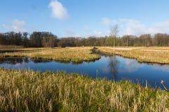 L'Oeverlanden, un secteur de marais avec une diversité naturelle riche Image libre de droits